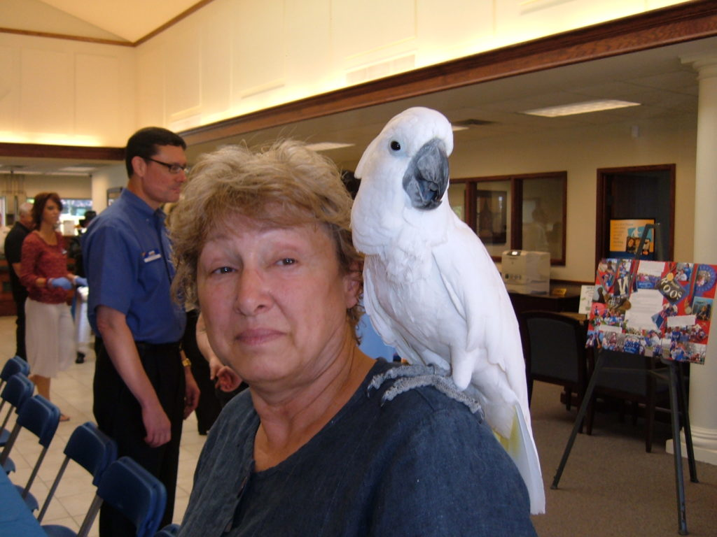 A cockatoo and new friend