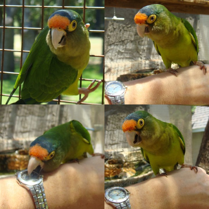 Lollipop was fascinated with my watch today